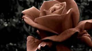 Ovo. - Spini de trandafir