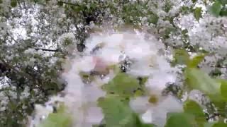 #Nisan yağmuru