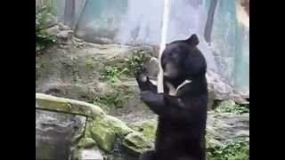 Kung Fu Bear Original Footage