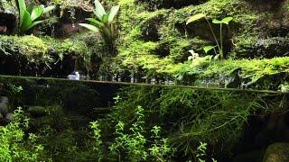 Paludarium: Fire Belly Newts Live Feeding width=