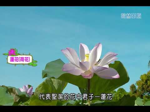 國小_自然_補充─微距:水生植物特性【翰林出版_四上_第二單元 水生生物的世界】 - YouTube