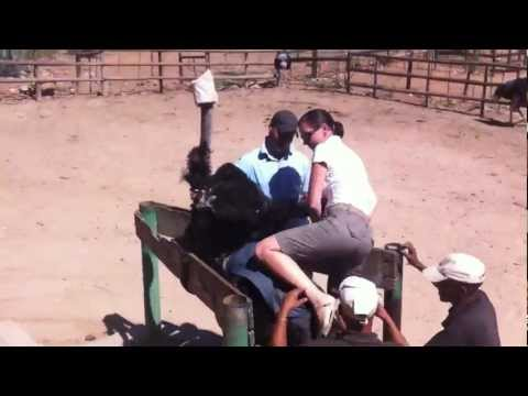 Christina riding an ostrich in South Africa