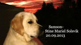 Samson - Regina Spektor cover by Stine Mariel Solsvik