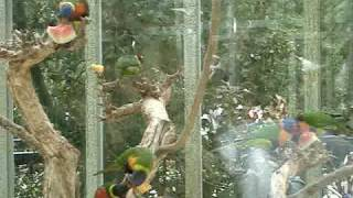 Tropical Birds at the Bellagio Conservatory