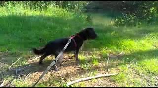 Hundepension muss schließen: Struppi sucht dringend ein neues Zuhause