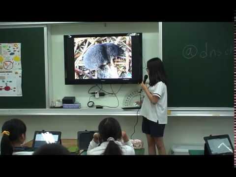 探索大卷尾 - YouTube