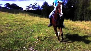 ride it, my pony
