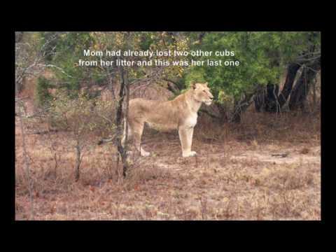 South Africa –  Ngala HD.mp4