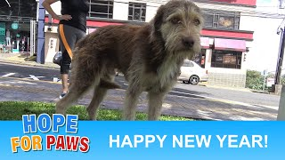 LAST VIDEO for 2018!!!  Happy New Year!!! #HopeForPaws