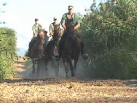African Big Five Horse Safari close to wildlife