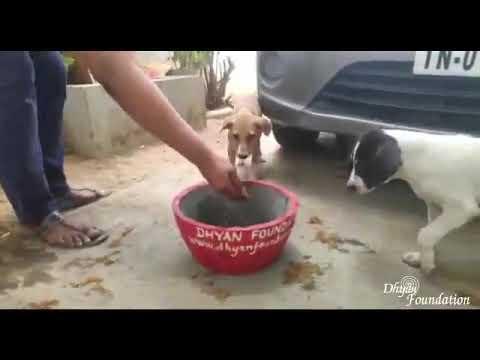 Water pot distribution in chennai