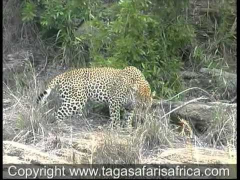 African Safaris to Simbambili Game Reserve