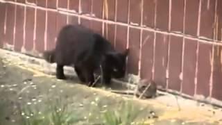 un topo contro 4 gatti.mp4