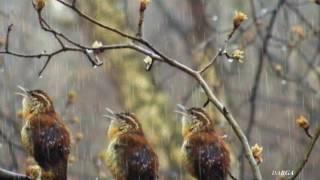 Sergey Grischuk - Melody of rain (Deszczowa melodia)