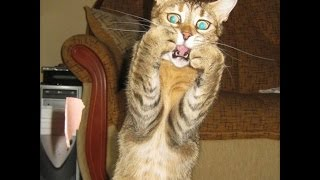 Overly Dramatic Cats! --- CAT PHOTO COMPILATION