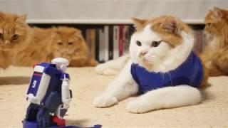 【マンチカンズ】にゃんことPK練習【ワールドカップ】~ Cat's Penalty s shoot-out ~