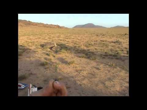 Impala Adventures – Grass Collecting – Morocco 05/10/2006
