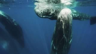 Sperm Whale Encounter