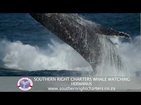 Whale Watching: 15 seconds of up, close & amazing sightings