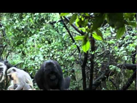 South Africa – Part 20 – Monkeyland – Plettenberg Bay