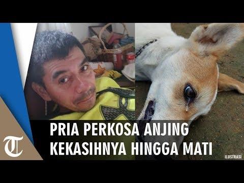 Download Video Pria 52 Tahun Perkosa Anjing Hingga Mati Karena Pacarnya Tak Pulang