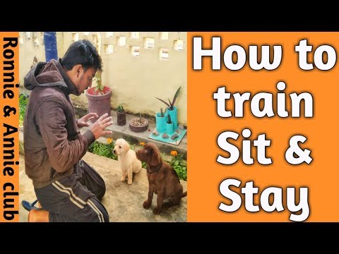 Download thumbnail for How to Teach your puppy to Sit & Stay