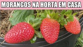 Eu NUNCA IMAGINEI que fosse TÃO FÁCIL colher Morangos de MONTÃO!! (e sem bichos ? )TOP 10!!!
