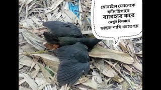 See How To Catch The Birds In Mobile Phone,ডাহুক পাখি শিকার