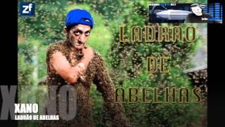 XANO LADRÃO DE ABELHAS