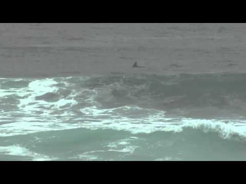 Dolphins in Plettenberg Bay