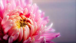 one minute relaxation,mindfulness bell 1 minute,meditation bell 1 minute,minute relax,peaceful music