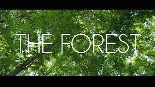 Cymba & Victoria Rojas - The Forest (Official Music Video)