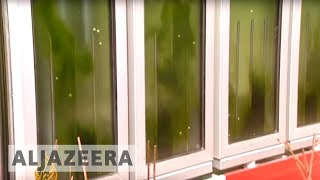 German 'algae experiment' powers green houses