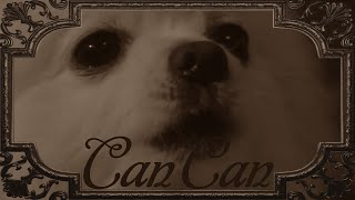 Gabe the Dog - Can Can