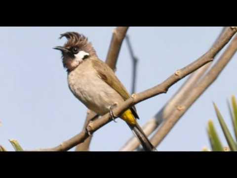 Nepal Kathmandu Langtang Birds Trek Package Holidays Travel Guide Travel To Care