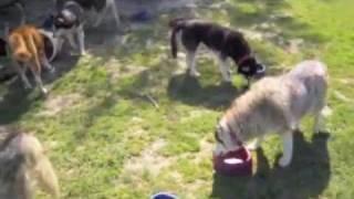 Problemhund Fürst