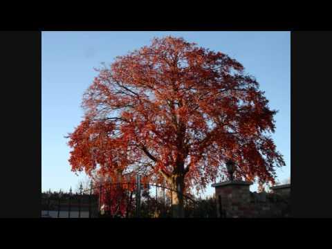 The Kinks Autumn Almanac Chords Chordify