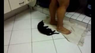 Gato vagabundo - Obama