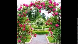 Frescas Rosas, J B S    (Cover) Renacimiento 74