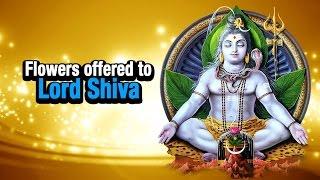 Flowers offered to Lord Shiva   Maha Shivaratri Special   ARTHA   AMAZING FACTS