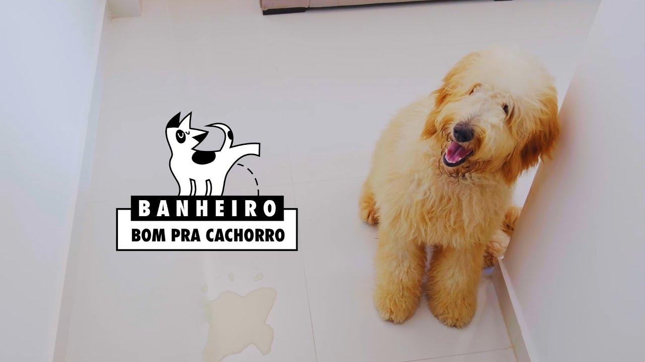 Projeto Banheiro bom para cachorro