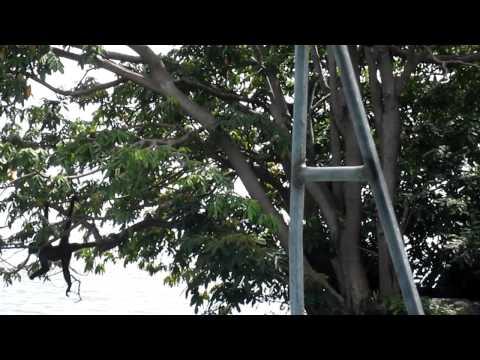 Nicaragua 072.MOV