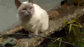 KANDI CAT WITH SOUND EFFECTS