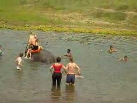 Olifant zwemmen in nepal