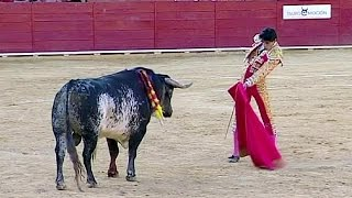 Toureiro morto por touro em Espanha
