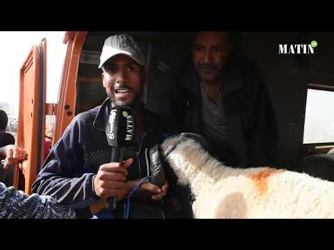 Video : Aïd Al Adha : Les raisons derrière la flambée des prix