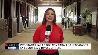 Programa para niños, con caballos rescatados