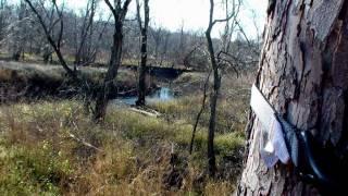 Illinois Whitetail Taken With Handgun
