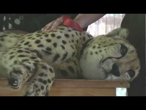 Cheetah Sanctuary in South Africa