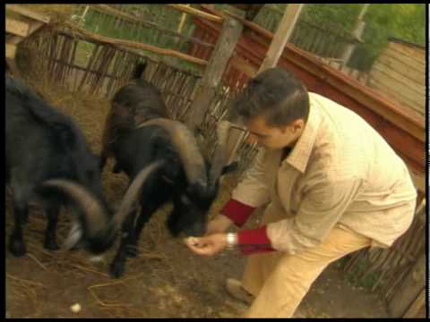 """2004 – """"ТЕЛЕпутешествия"""": Ясногородская страусовая ферма + зоо"""